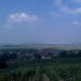 Vineyard in Champagne